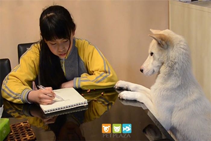 ông bố huấn luyện chó cưng giám sát con học bài