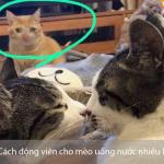4 cách động viên cho mèo uống nước nhiều hơn - pet plaza