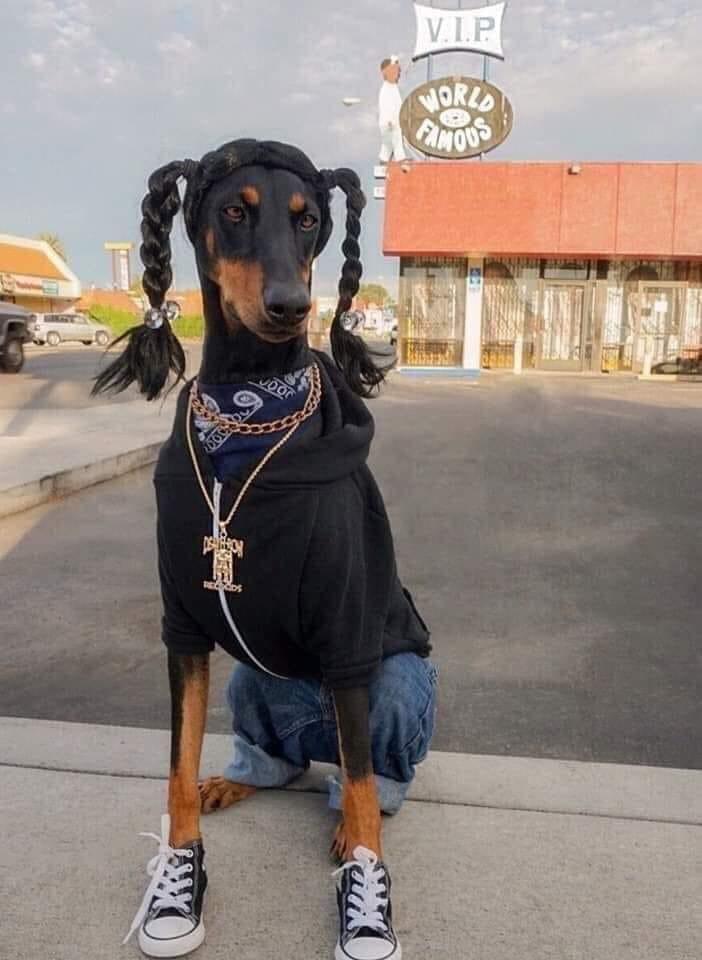 Bạn nên nuôi giống chó cảnh nào tại Pet Plaza