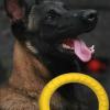 Vòng cao su huấn luyện thú cưng - phụ kiện chó mèo