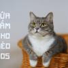Sos special for cat - chăm sóc mèo