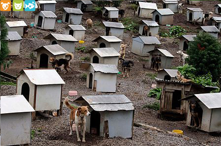 Thị trấn dành cho Thú cưng bị bỏ rơi - phụ kiện thú cưng Petplaza