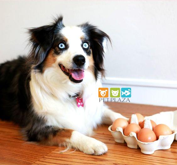Thức ăn tươi sống cho chó mèo - phụ kiện thú cưng pet plaza