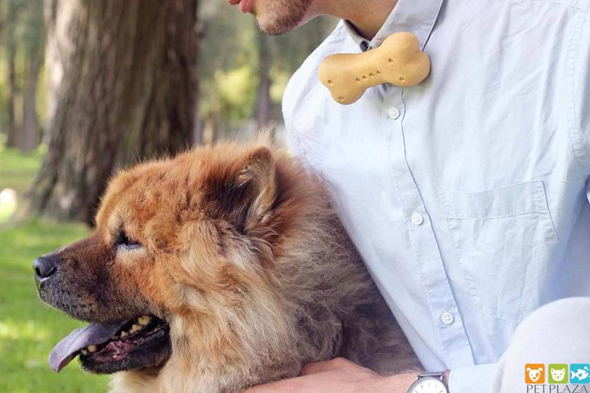 Thức ăn tươi sống cho Chó và Mèo BARF – Phụ kiện chó mèo Pet Plaza