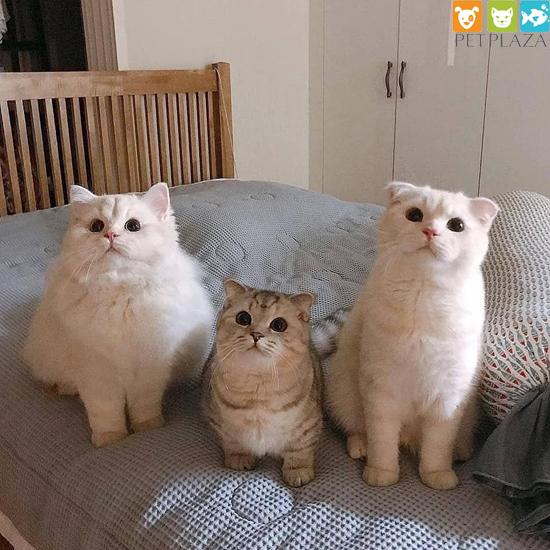 Thực đơn cho mèo con đã cai sữa - Phụ kiện chó mèo Pet Plaza