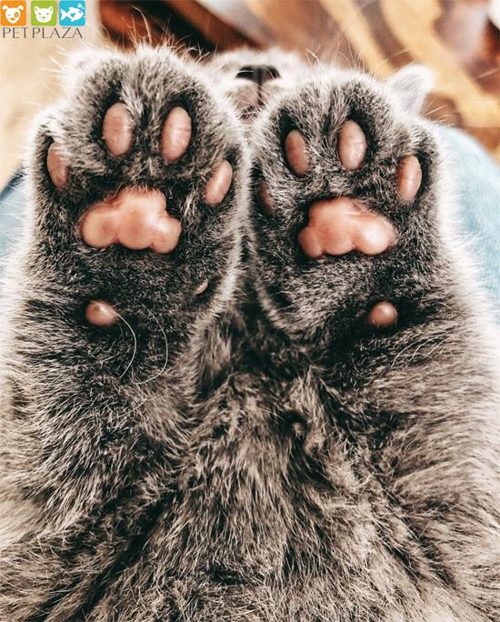 Thực đơn cho mèo con đã cai sữa - Phụ kiện thú cưng Pet Plaza