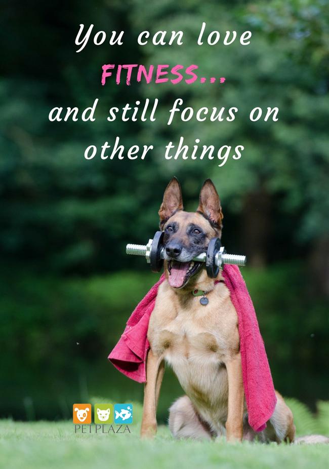 Thực đơn giảm cân cho chó - phụ kiện thú cưng Pet Plaza