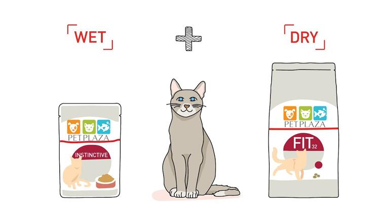 Chế độ ăn Mix Feeding cho mèo trưởng thành