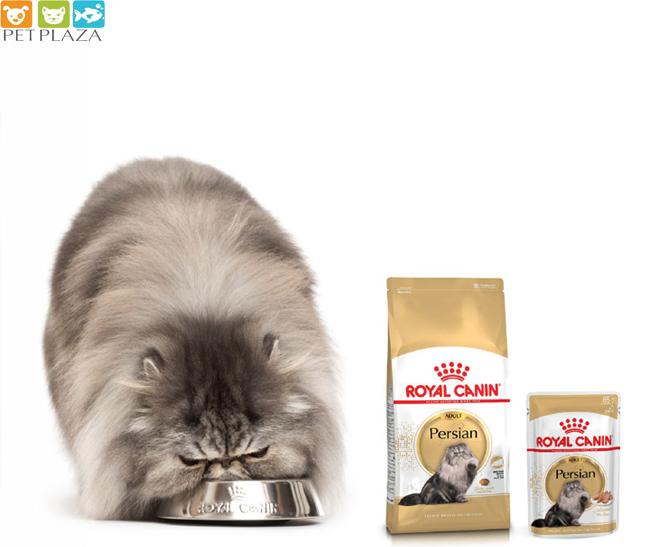 Mèo chọn thức ăn như thế nào? PetPlaza