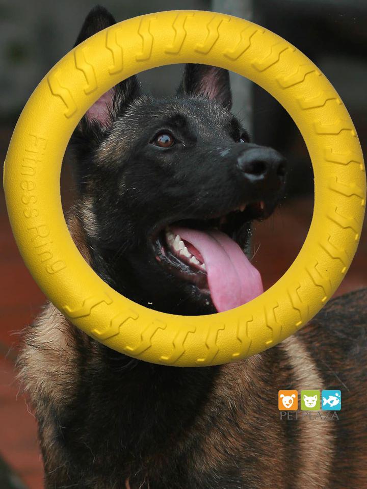 Vòng cao su cho chó dùng để huấn luyện - phụ kiện chó mèo pet plaza