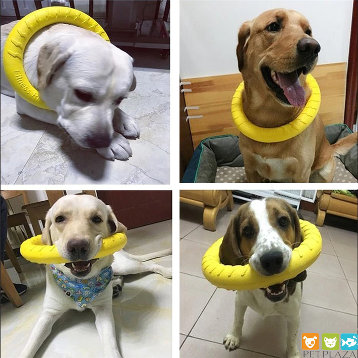 Vòng cao su huấn luyện thú cưng
